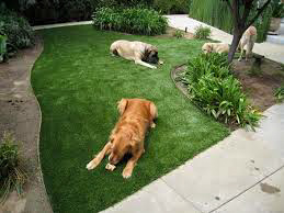 Dogs laying on artificial grass.