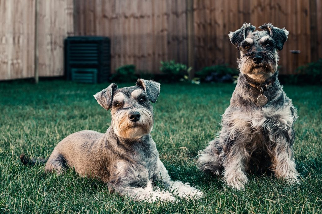 Dogs on grass.